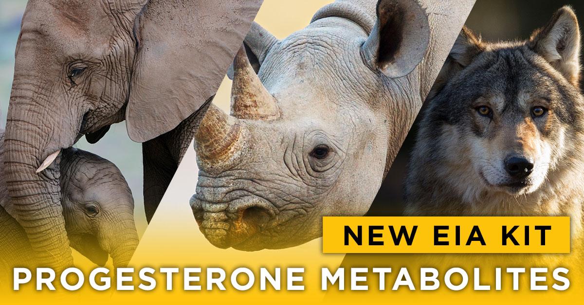 Progesterone Metabolites Kit