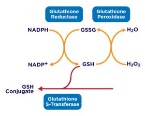 GSH-diagram